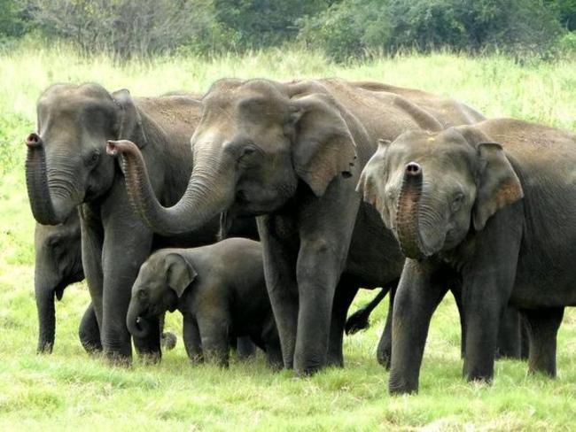 sloní safari