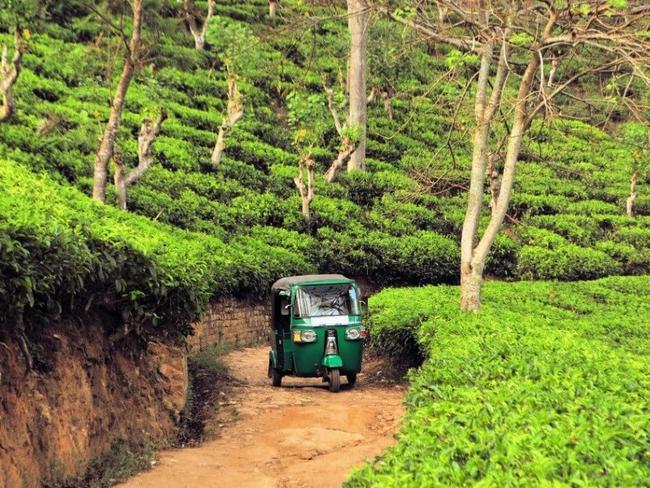 Srí Lanka - tuk tukem mezi čajovými plantážemi