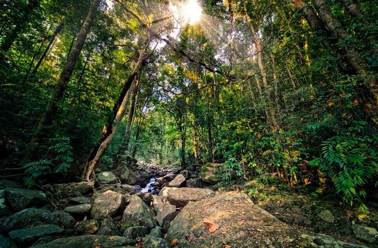 Deštný prales Sinharádža