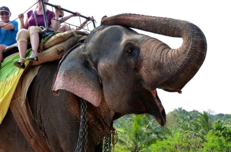 Luxusní zájezd Srí Lanka v zimě